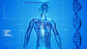 human skeleton 163715 1280 300x169 - The Evolving Face of Healthcare Space